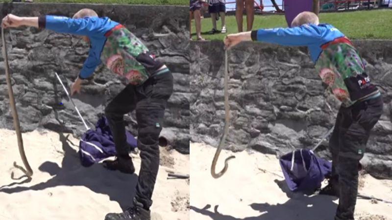 VIDEO: Serpiente muy venenosa causa pánico en zona de juegos infantiles en Australia