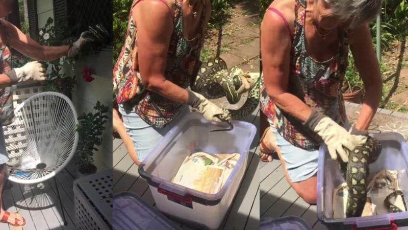 VIDEO: Mujer arriesga su vida para proteger a su familia de una anaconda de 3 metros