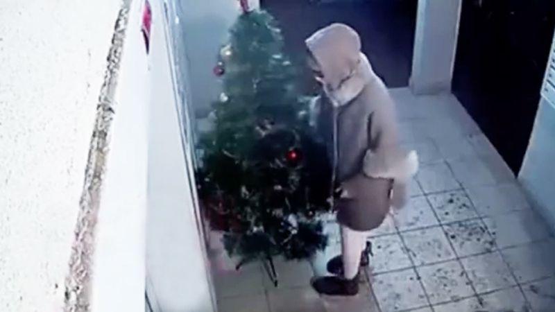 Mujeres roban un árbol de Navidad; dejan en su lugar uno más pequeño y sin ninguna decoración