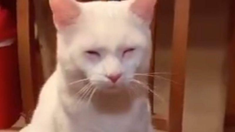 Gato hace reír a todos en Internet al llorar por la cebolla que partía su dueña en la cocina