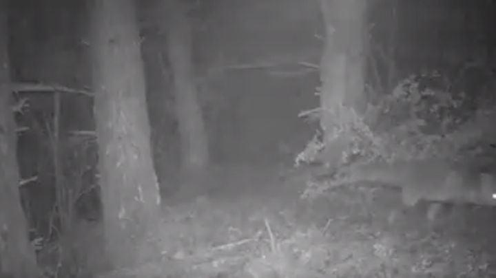 VIDEO: Familia española capta extraños sucesos nocturnos con cámara oculta en el bosque