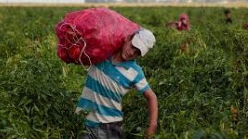 Campo mexicano espera mayor presión laboral por parte de EE.UU