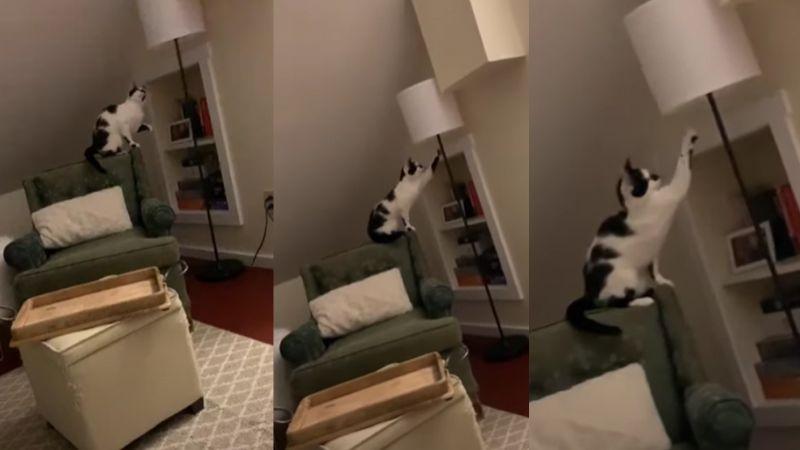VIDEO: Gato deja en shock a millones en el mundo al encender lámpara con sus patas