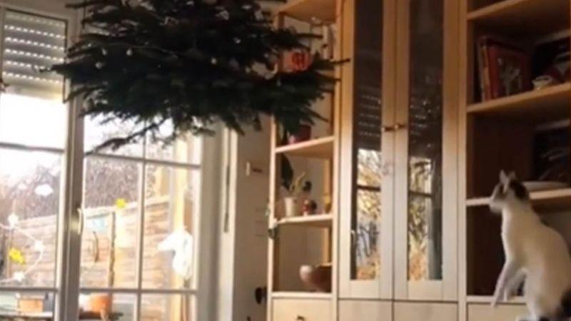 Gato consigue llegar al árbol navideño que su amo colocó en el techo para que no lo derriben