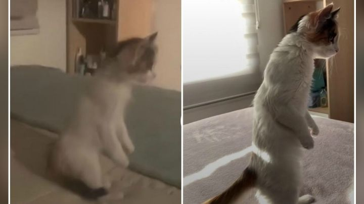 VIDEO: Gatito se pone de pie como humano y enternece a millones en las redes sociales
