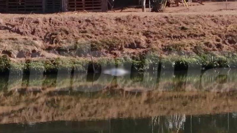 Cajeme: Localizan cuerpo al flotar en las aguas del Canal Bajo en el Valle del Yaqui