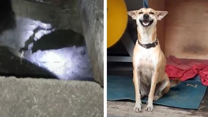 VIDEO: Tras horas atrapado en tubería de drenaje, perro es rescatado sano y salvo