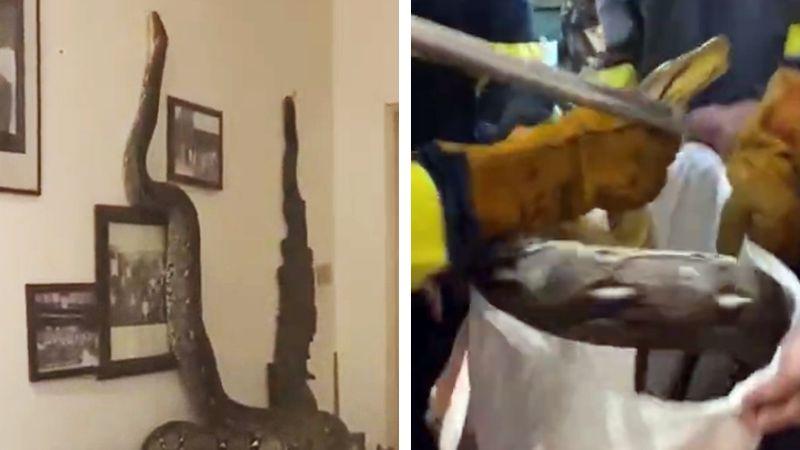 Mujer se lleva el susto de su vida al encontrar gigantesca serpiente en su casa