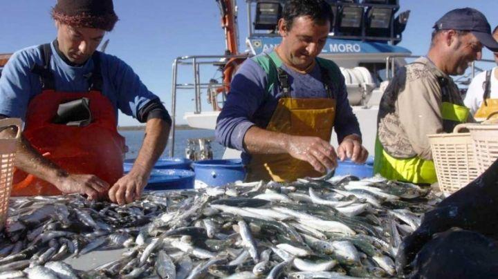 La Industria Sardinera es una potencia en el sector pesquero a nivel nacional