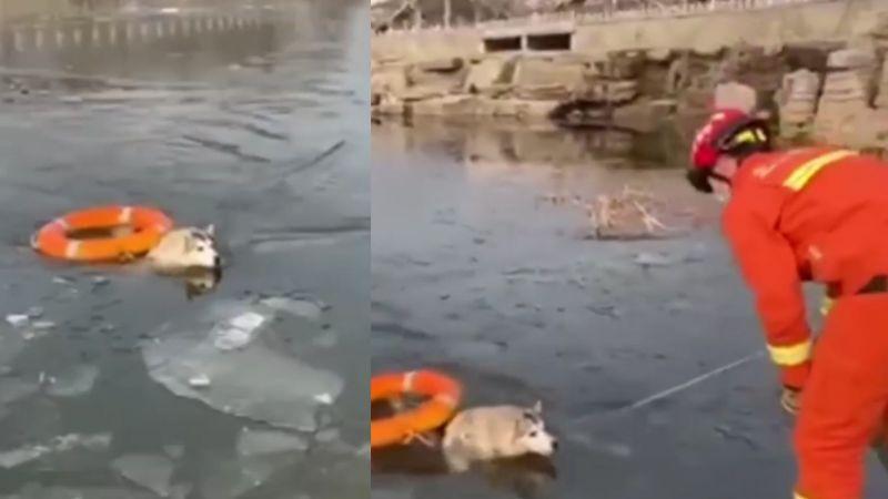 VIDEO: Husky es recatado por bomberos de un lago congelado y se vuelve viral en redes