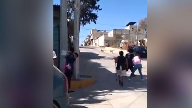 Mujeres golean hasta morir a perro de raza pitbull tras agredir a un chihuahua