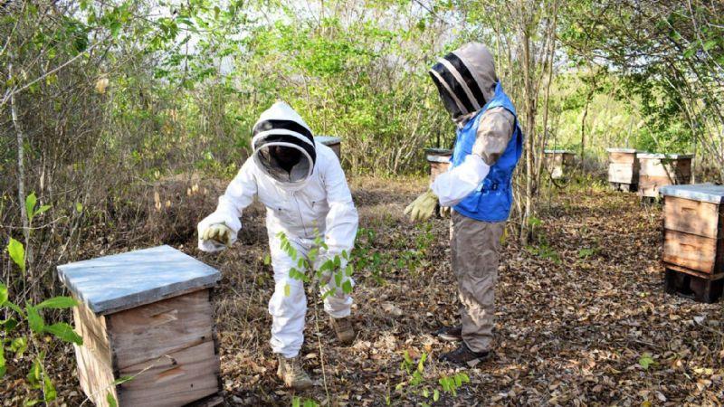 Miel 'pirata' deja sin oportunidad en el mercado a los apicultores de Sonora