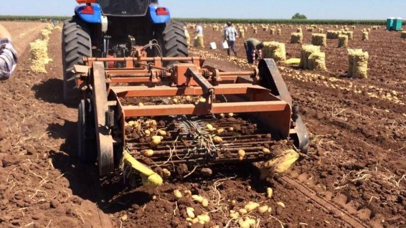 México confirma autosuficiencia en producción del cultivo de papa en 2020