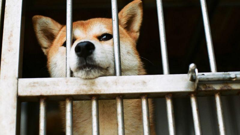 China prohibiría el consumo de perros y gatos por crisis del coronavirus