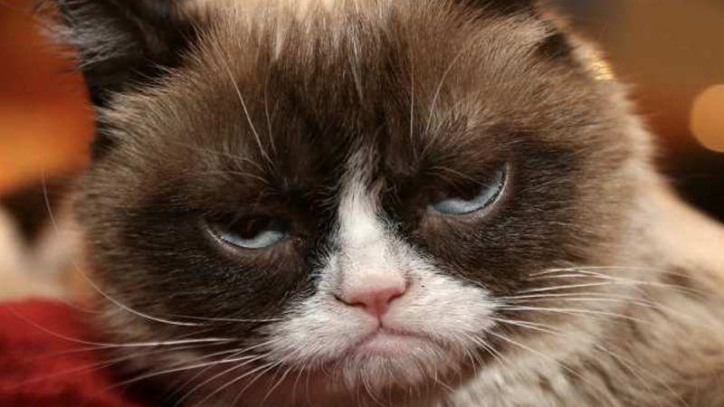 Encuentran gata con gesto gruñón y la bautizan como la nueva Grumpy Cat