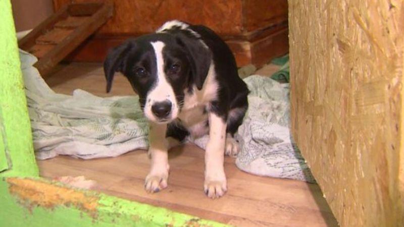 Una cruel pareja rusa adopta perro de un refugio para matarlo y cocinarlo