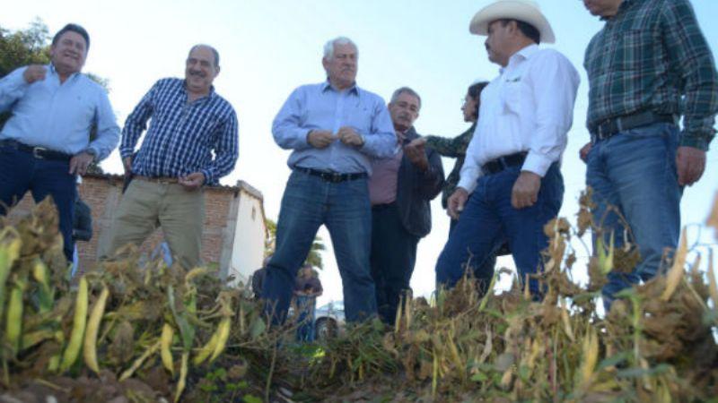 Cultivos de la región del Mayo sufren daños parciales por heladas