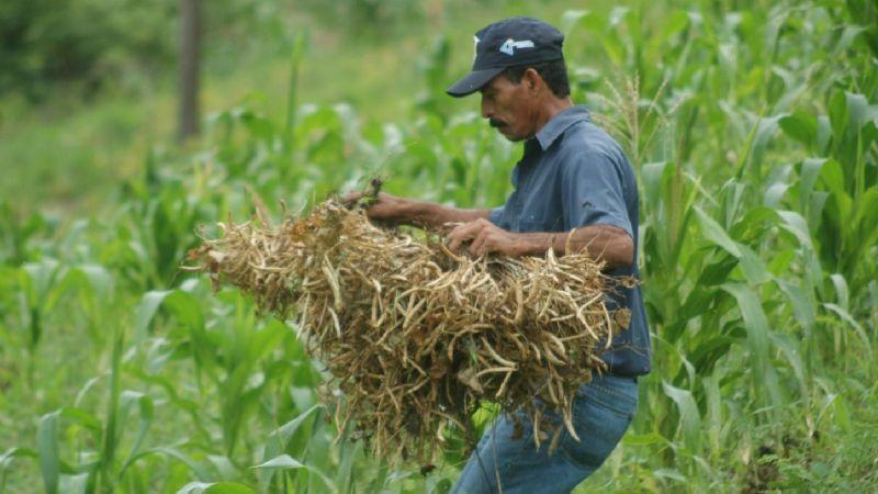 Sagdr define los apoyos para los productores agropecuarios de Durango