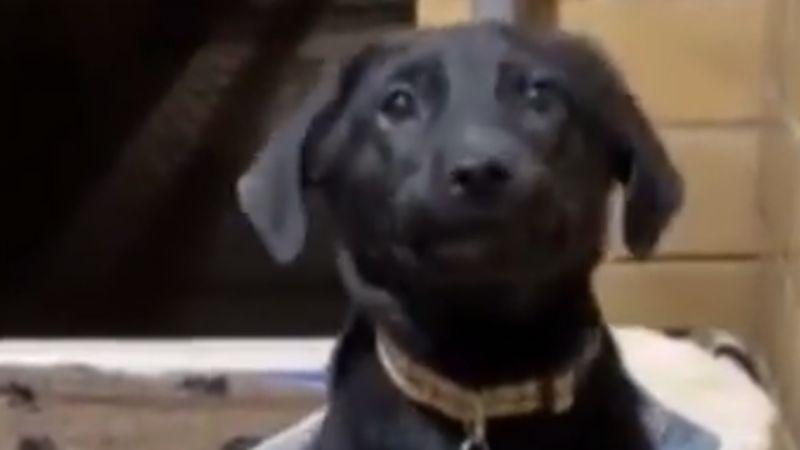VIDEO: Perro sonríe a visitantes de refugio animal para ser adoptado