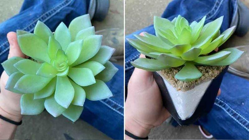 Mujer regó durante dos años una planta de plástico al creer que era natural