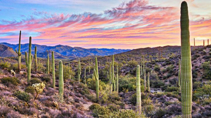 ¡Alerta por lluvias! Así será el clima en Sonora este domingo 25 de julio del 2021