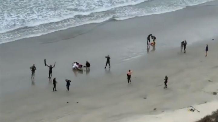 Joven surfista pierde la vida al ser atacado por un tiburón en una playa de California