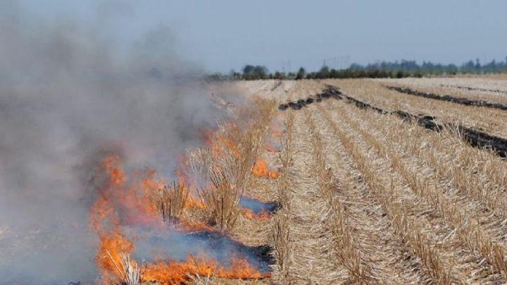La Dirección de Ecología de Navojoa vigilará que no ocurra la quema de gavilla