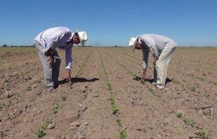 Por vencer los permisos de siembra para la temporada de verano en Cajeme