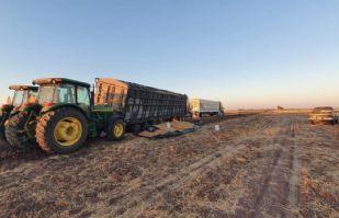 Falta de acuerdos con industrias complica la venta de trigo de Sonora