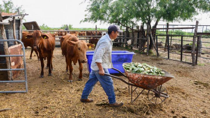 Reestructuración de subsectores ganaderos podría ser de beneficio para Sonora