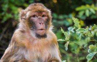 Monos atacan a empleado de hospital y le roban muestras de sangre para Covid-19