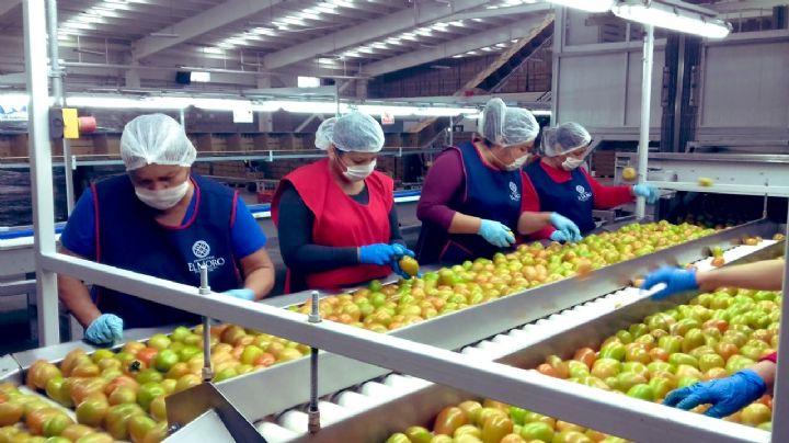 México logra cuatrimestre histórico de exportaciones agropecuarias