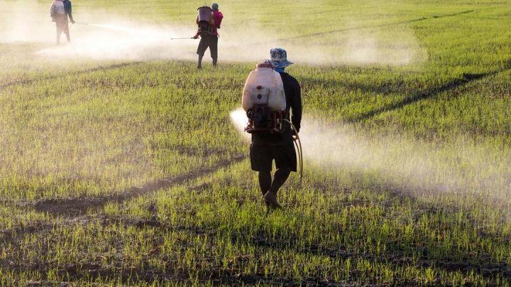 Semarnat y CNA buscan darle solución al tema del glifosato en el agro