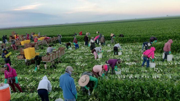 Horticultores destacan buena demanda por parte de Estados Unidos