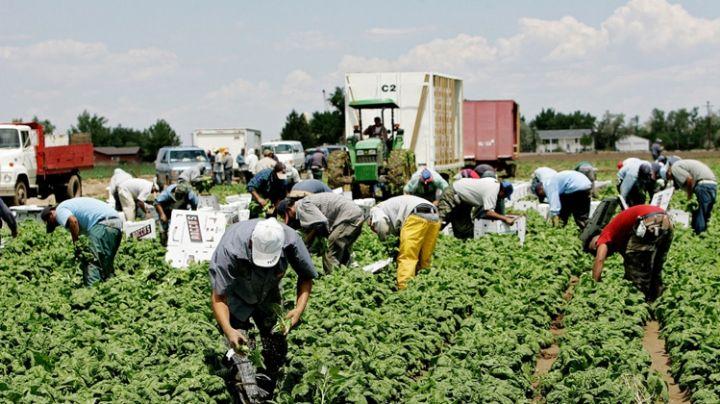 Horticultores reconocen la importancia de la mano de obra en el Valle del Yaqui