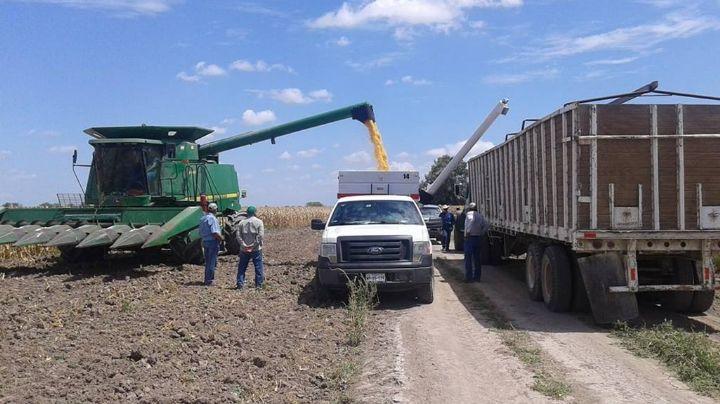Actividad laboral agrícola de Sonora sufre desplome de 10 por ciento
