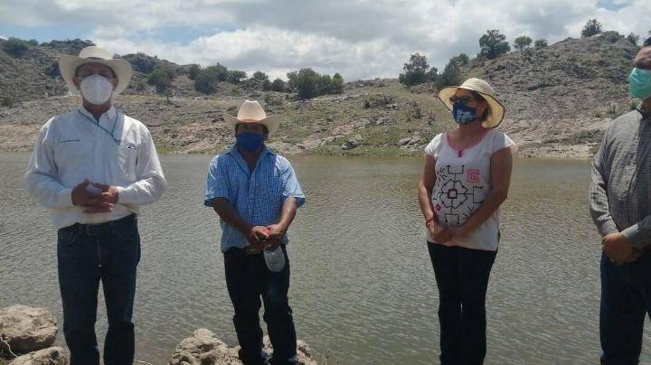 Sagarhpa proporciona 20 mil alevines de tilapia a los productores de Yécora