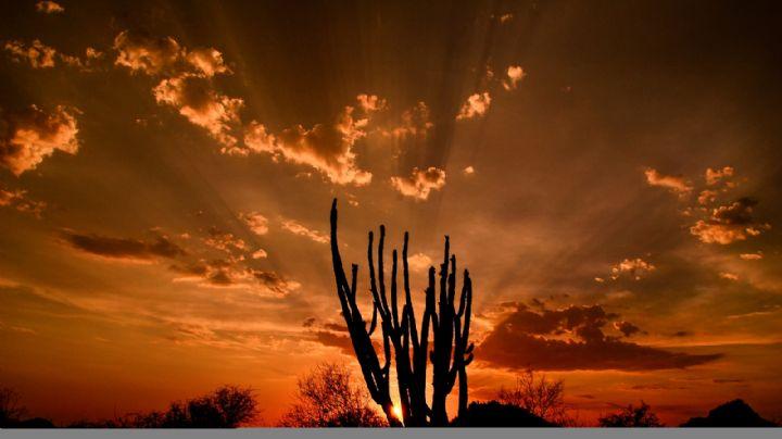 El amor de Frann Guerrero por el desierto