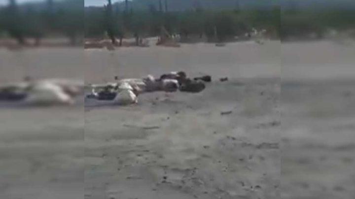 Macabro hallazgo: Dejan 4 cuerpos a la orilla de la carretera Sonoyta Caborca