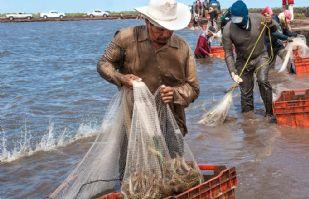 Acuacultores y pescadores piden la exclusión del camarón en el tratado con Ecuador