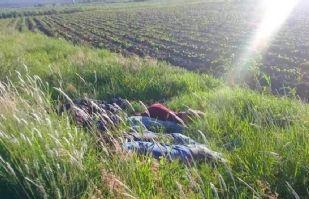 Siete cadáveres con impactos de bala son hallados en carretera de Guanajuato