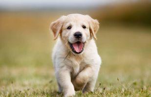 ¿Amas a tu perro? Estas 5 actividades cotidiana podrían hacerle daño