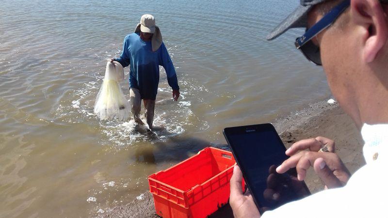 Sector acuícola presenta excelente sanidad durante las cosechas de camarón
