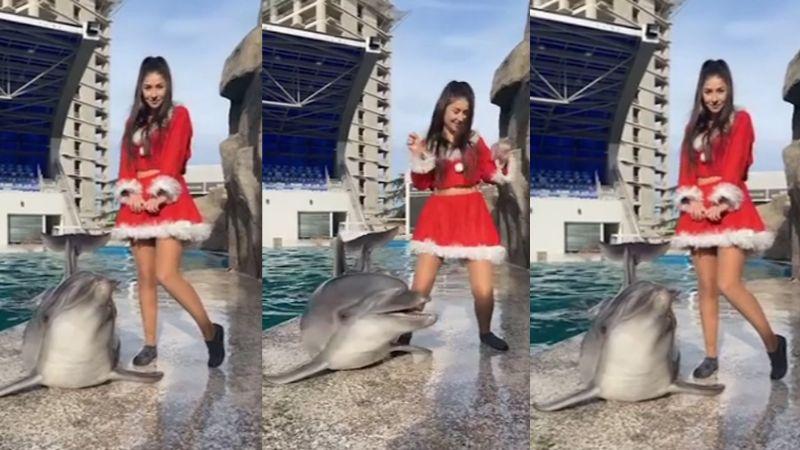 VIDEO: Delfín se viraliza al realizar famosa coreografía de TikTok fuera del agua