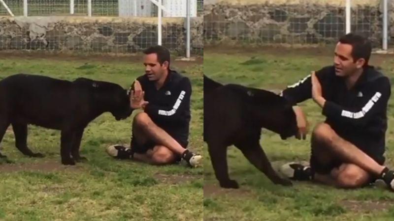 VIDEO: Pantera intenta ataca a su cuidador y este logra zafarse al hacer esto