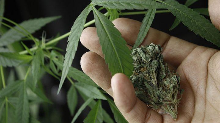 SSA reglamenta uso, venta y producción de cannabis medicinal; se prevé despenalización
