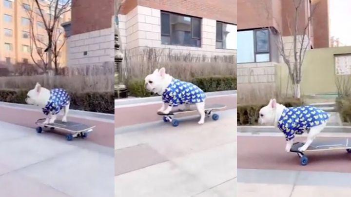 VIDEO: Perrito enternece a las redes sociales al pasear sobre una patineta