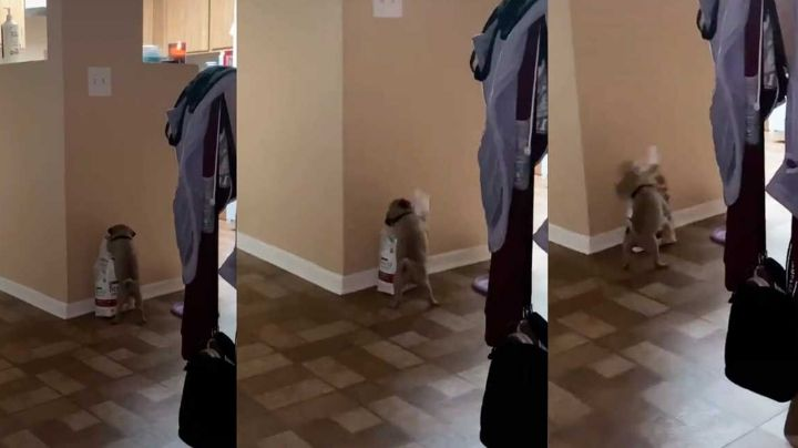 Perrito deja boquiabiertos a miles al hacer berrinche tras no poder abrir su bolsa de comida