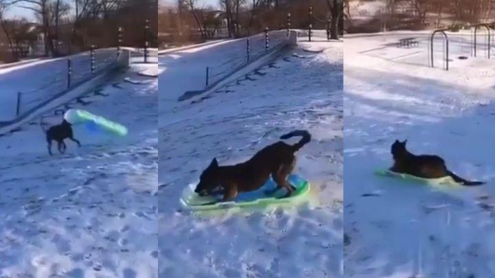 Perro se viraliza al divertirse mientras se desliza sobre la nieve en bandeja
