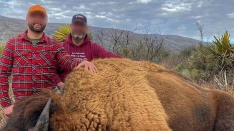 Denuncian caza ilegal de bisonte en Coahuila; fotos causan indignación en redes